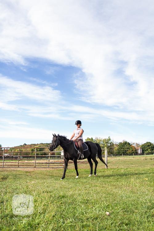 horse portraits gilbertsville pa